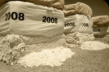 Cada passo da operação custa o seu valioso algodão que caiu no chão (a partir da cesta colheitadeira para o boll buggy, a partir do boll buggy para o módulo construtor, etc.)