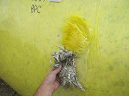 As fotos abaixo mostram o resultado de um chumaço de algodão ficando alojado no bico de pato durante a alimentação envoltório