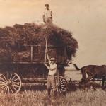 Hay & Wheat